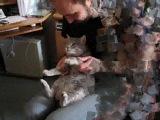 Мой кот - Шустрик. Серия №1